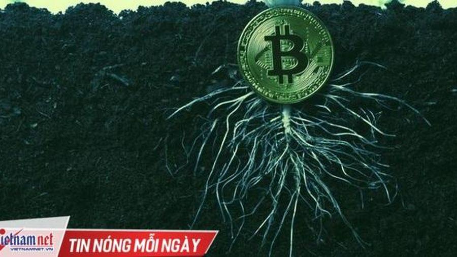 Bitcoin sắp có bản cập nhật quan trọng sau 4 năm