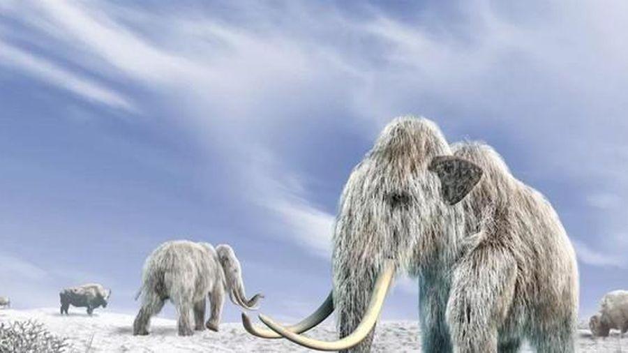 5 sinh vật thời tiền sử được bảo quản hoàn hảo trong băng