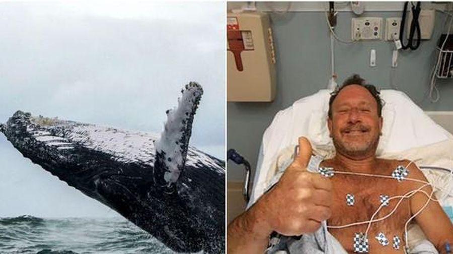 Ngư dân Mỹ bị hút vào miệng cá voi vẫn sống sót trở về