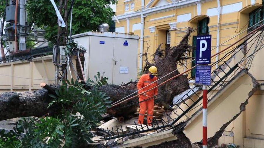 Cận cảnh hiện trường cây cổ thụ bất ngờ bật gốc, đè sập tường Tòa án nhân dân tối cao