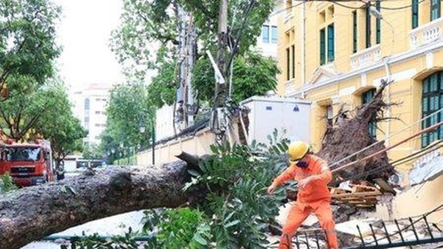 Cây cổ thụ bật gốc, đổ sập tường TAND tối cao ở Hà Nội