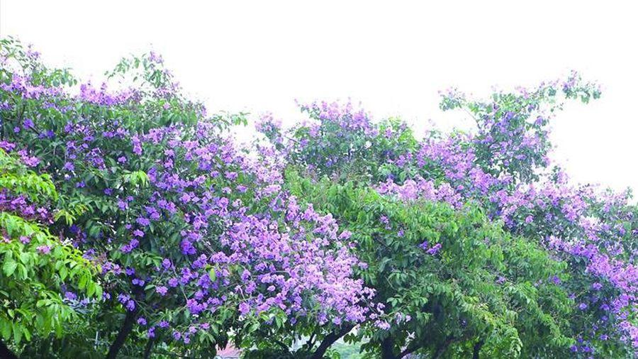 Những mùa hoa trên phố