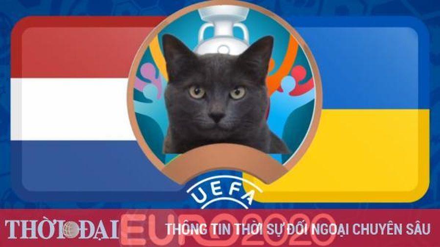 Mèo tiên tri dự đoán Hà Lan vs Ukraine - EURO 2021: Kết quả bất ngờ