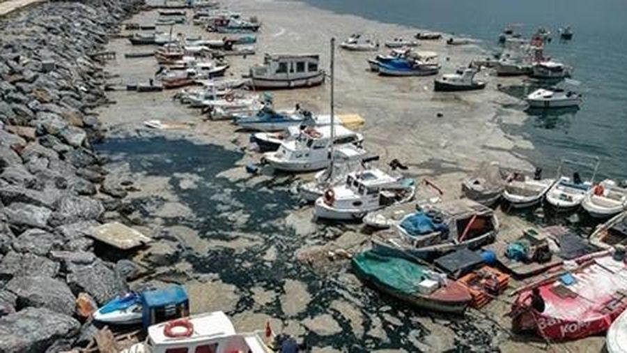 Tổng thống Thổ Nhĩ Kỳ hứa giải quyết vấn đề chất nhầy ở Biển Marmara