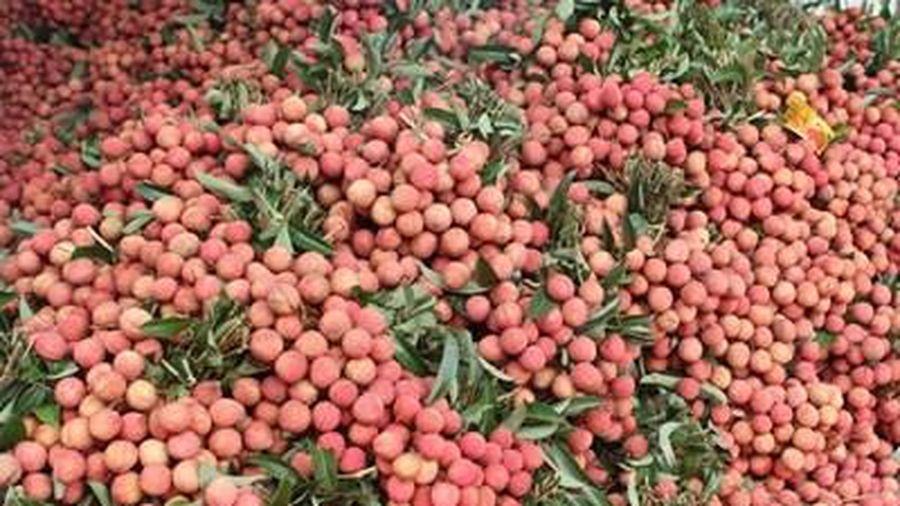 Bắc Giang: Mỗi ngày tiêu thụ từ 5 - 7 nghìn tấn vải thiều