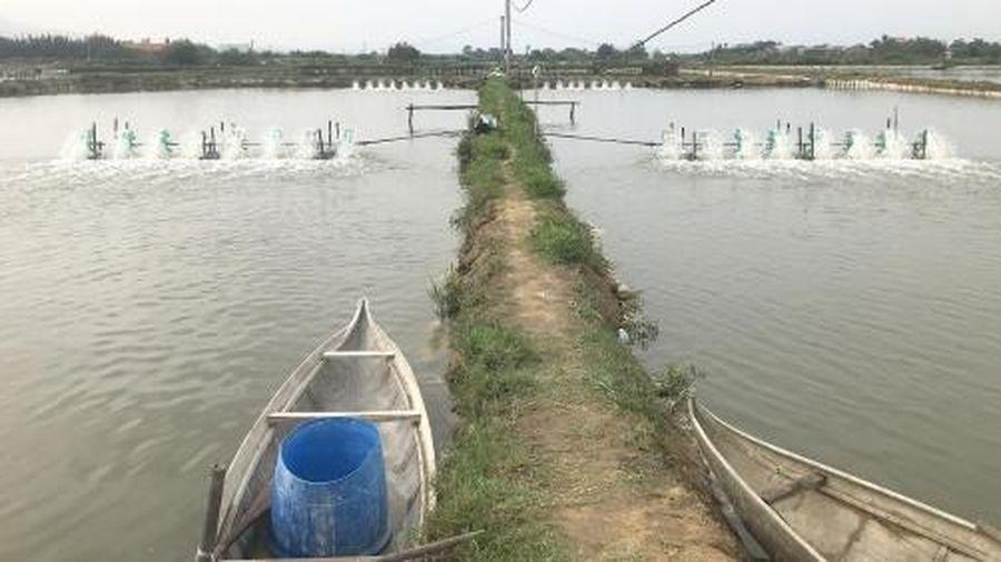 Giải pháp khắc phục nạn ô nhiễm nguồn nước nuôi tôm hiệu quả