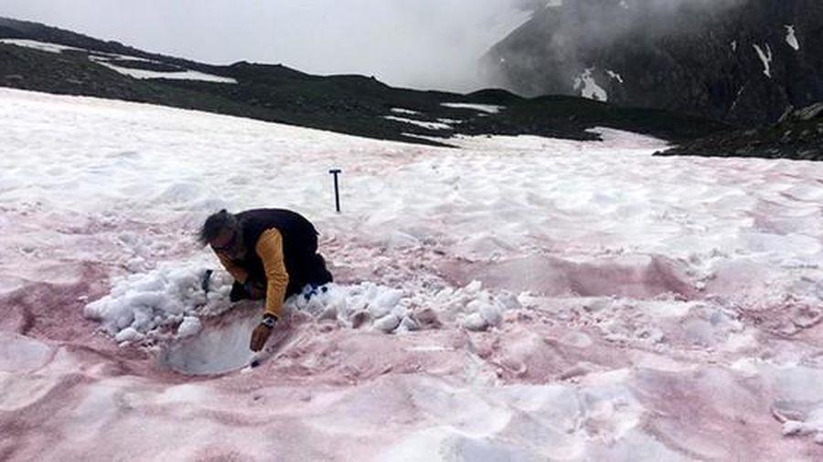 Giải mã bí ẩn hiện tượng 'máu sông băng' đáng sợ
