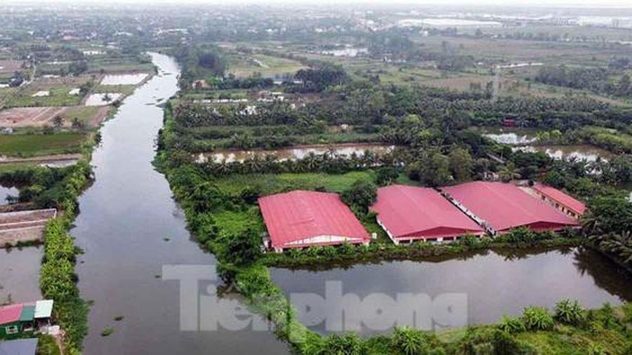 Xử phạt xí nghiệp chăn nuôi gia súc xả thải trộm ra sông gây ô nhiễm ở Đồ Sơn