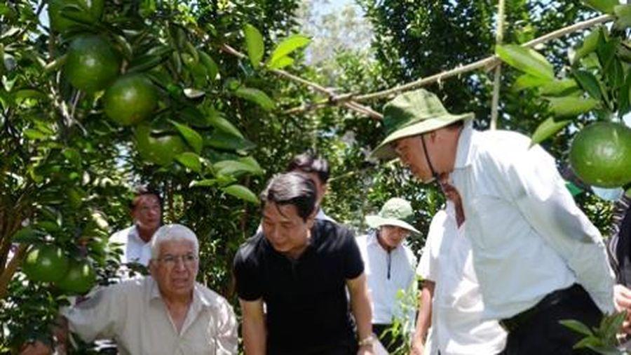 Bà Rịa - Vũng Tàu: Lên phương án hỗ trợ tiêu thụ nông, thủy sản