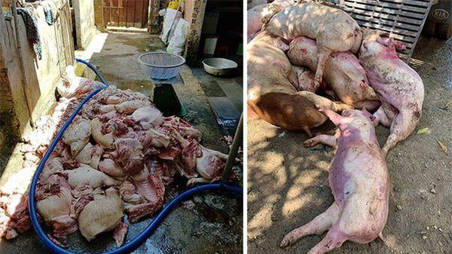 Những cái chết rùng rợn, bi thương của một gia đình 3 đời làm nghề đồ tể
