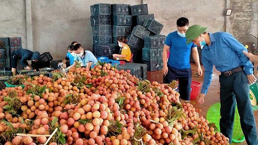 Hội Nông dân Bắc Giang 'Kết nối nông sản - san sẻ yêu thương - cùng nhau vượt qua đại dịch'