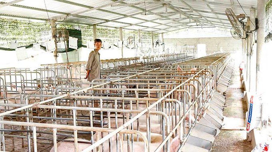 Chăn nuôi an toàn để phòng, chống dịch bệnh