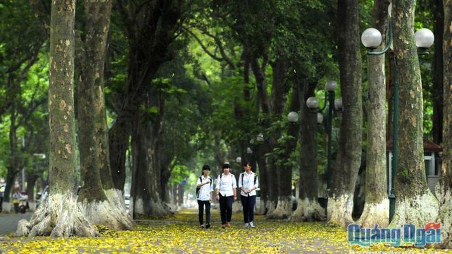 Sấu trên phố Phan Đình Phùng