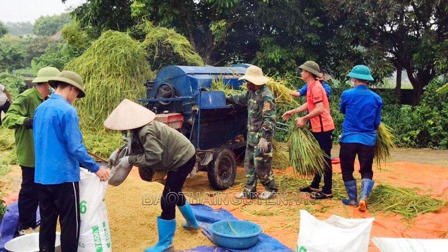 Giúp người dân đang cách ly thu hoạch nông sản