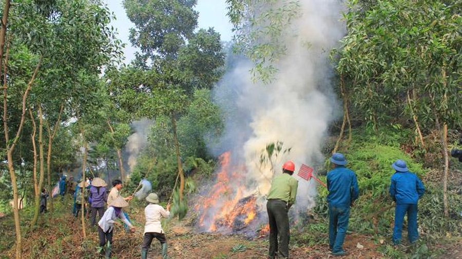 Chủ động ngăn chặn, hạn chế tới mức thấp nhất các vụ cháy rừng
