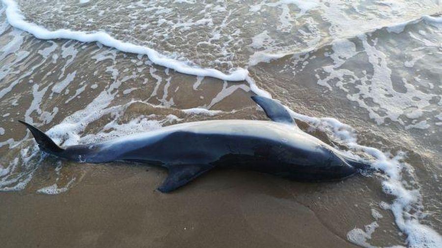 Nhiều sinh vật biển ở Sri Lanka chết không rõ nguyên nhân
