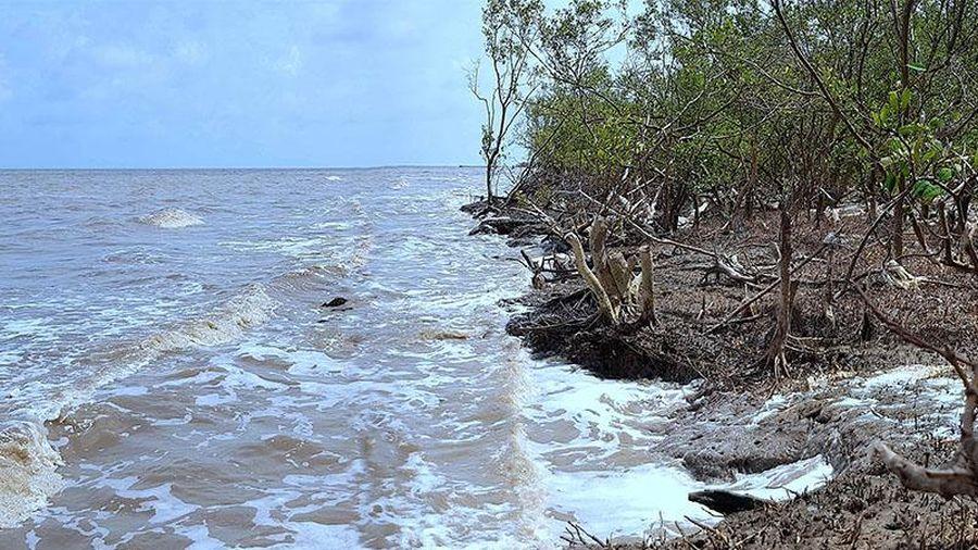 Cà Mau xuất hiện nhiều điểm sạt lở mới dọc đê biển