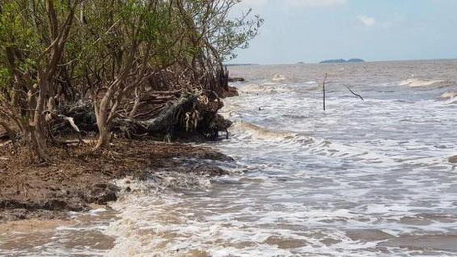 Xuất hiện nhiều điểm sạt lở dọc đê biển Cà Mau