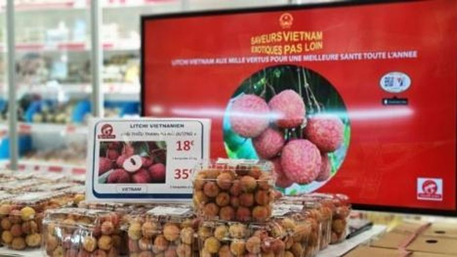 Vải thiều Việt Nam gắn tem truy xuất gia nhập thị trường Pháp: Đi trước, đón đầu xu thế tiêu dùng mới