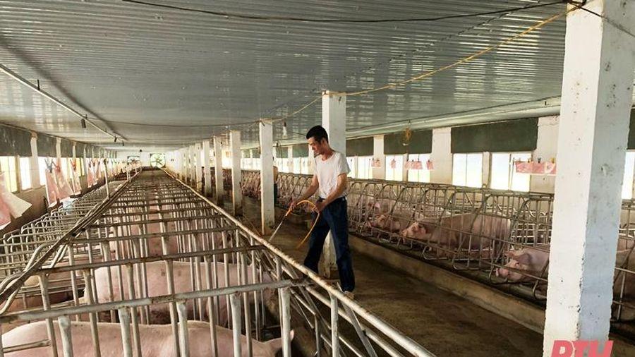Công điện khẩn về việc tập trung thực hiện các biện pháp cấp bách ngăn chặn bệnh Dịch tả lợn châu Phi