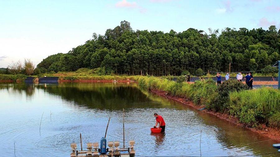 Hải Hà: Triển khai mô hình nuôi sò huyết thương phẩm trong ao đầm