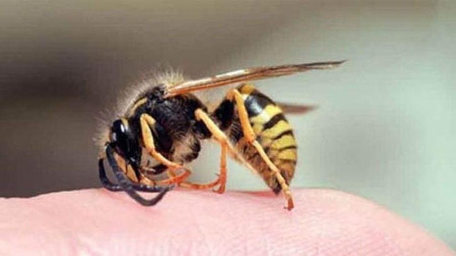 Đây là lý do vì sao ong mật sau khi đốt người xong lại bị chết