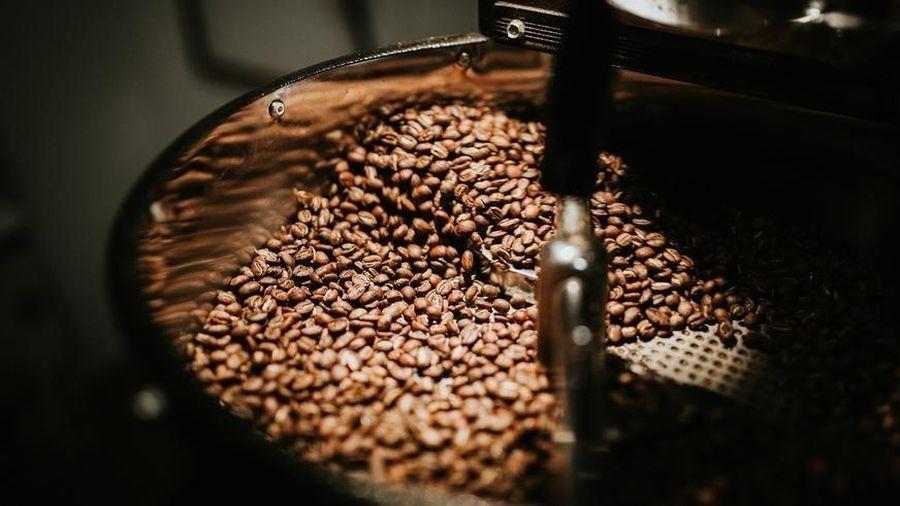 Giá cà phê hôm nay 17/6: Bất ngờ bật tăng mạnh mẽ, robusta trở lại ngưỡng 1.600 USD/tấn; Tình cảnh điêu đứng của ngành cà phê