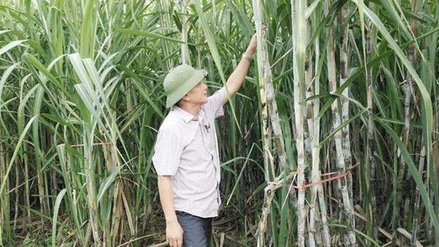 Sau nhiều 'tổn thất', Việt Nam áp thuế chống bán phá giá với đường Thái Lan