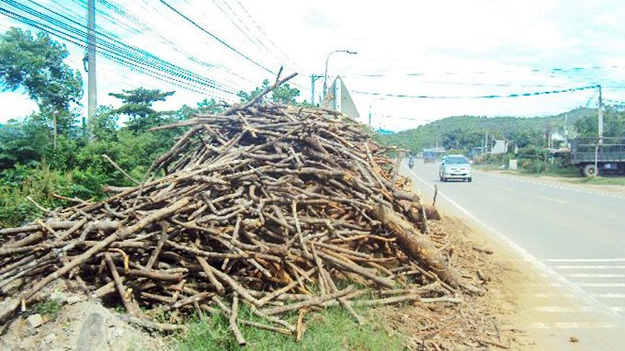 Để cây khô chiếm hành lang quốc lộ