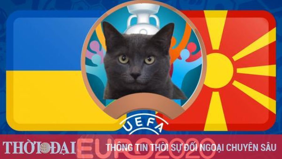 Mèo tiên tri dự đoán Ukraine vs Bắc Macedonia - EURO 2021: Mèo Cass thích chủ nhà