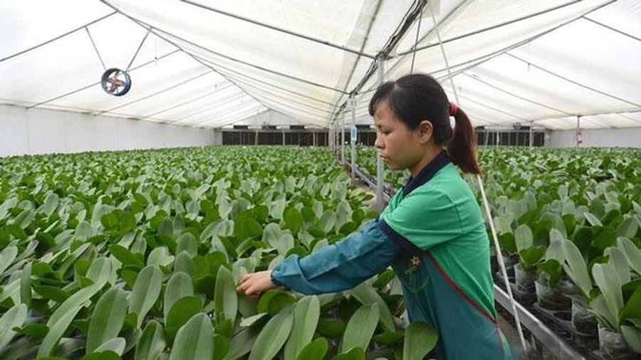 Phát triển nguồn nhân lực cho nông nghiệp công nghệ cao