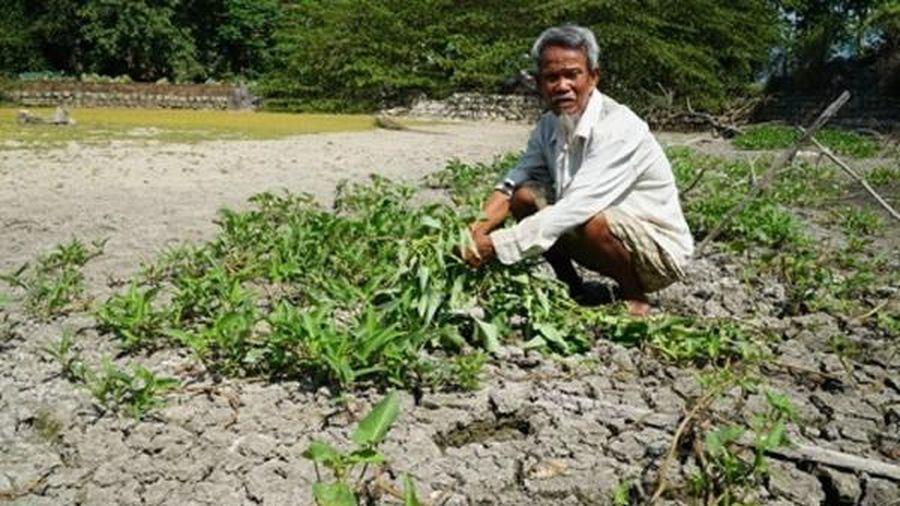 Hàng trăm héc-ta đất nông nghiệp ở Lý Sơn bị bỏ hoang vì hạn
