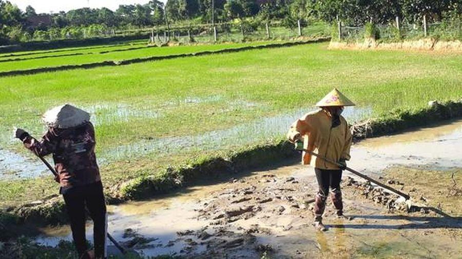 Hà Tĩnh: Hàng ngàn hecta lúa bị hư hỏng do ảnh hưởng mưa lớn phải gieo sạ lại