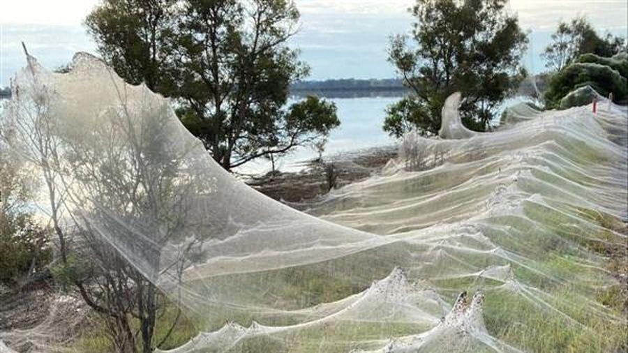 Mạng nhện bao trùm nông thôn Australia