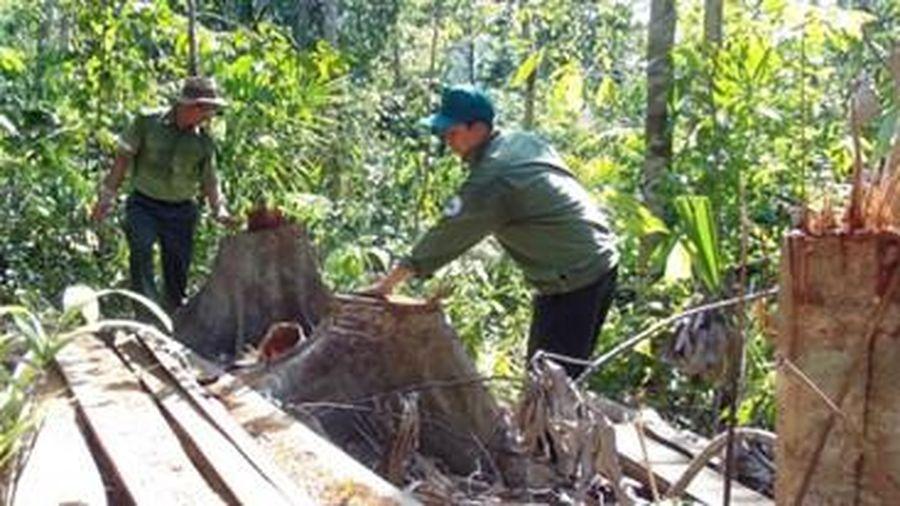 Phục hồi điều tra vụ tham ô tại BQL rừng phòng hộ Sông Hinh