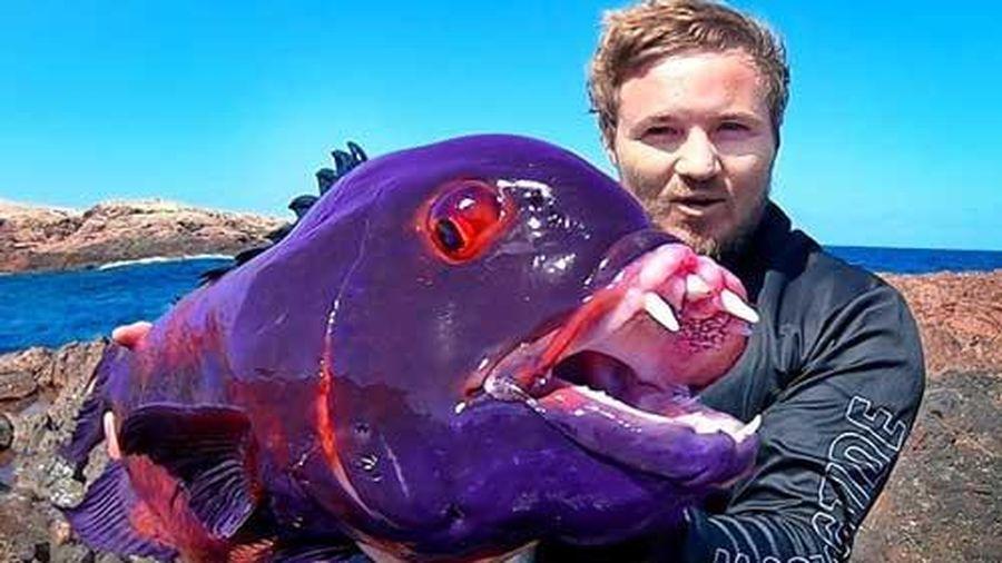 Thợ câu bắt được con cá 'quái vật' mắt đỏ ngầu như máu và răng như ma cà rồng