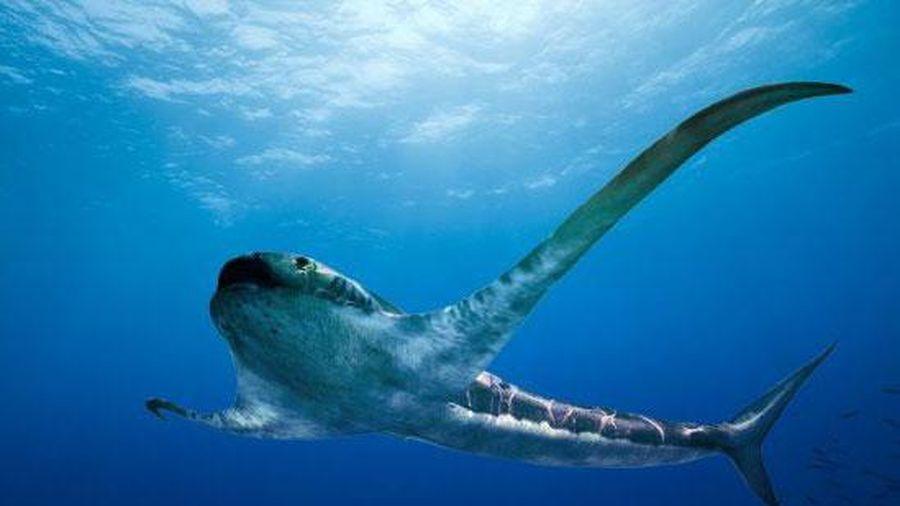 Cá mập cổ đại có 'đôi cánh' dài 2 m?