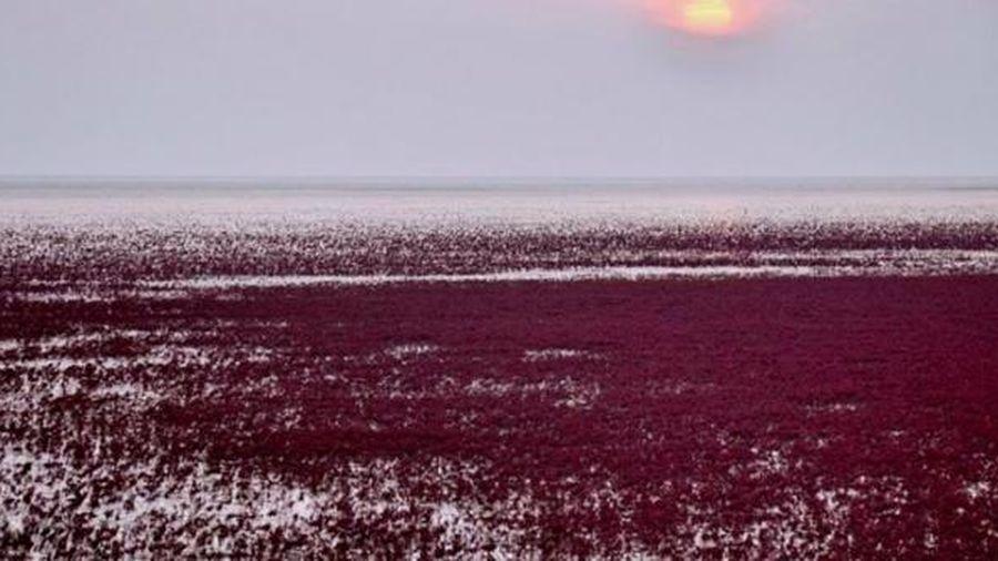 Kỳ quan 'bãi biển đỏ' ở Trung Quốc đẹp nhất vào mùa chim di cư