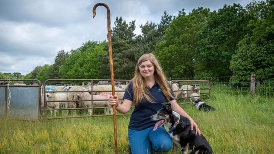 Cô chó điếc học ngôn ngữ ký hiệu để chăn cừu