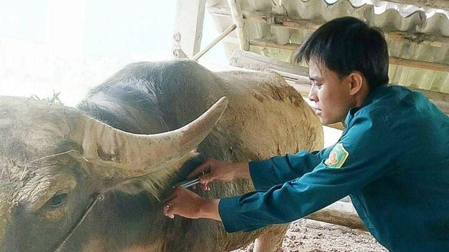 Huyện Thường Xuân có 5/6 xã công bố hết dịch Viêm da nổi cục trên trâu, bò