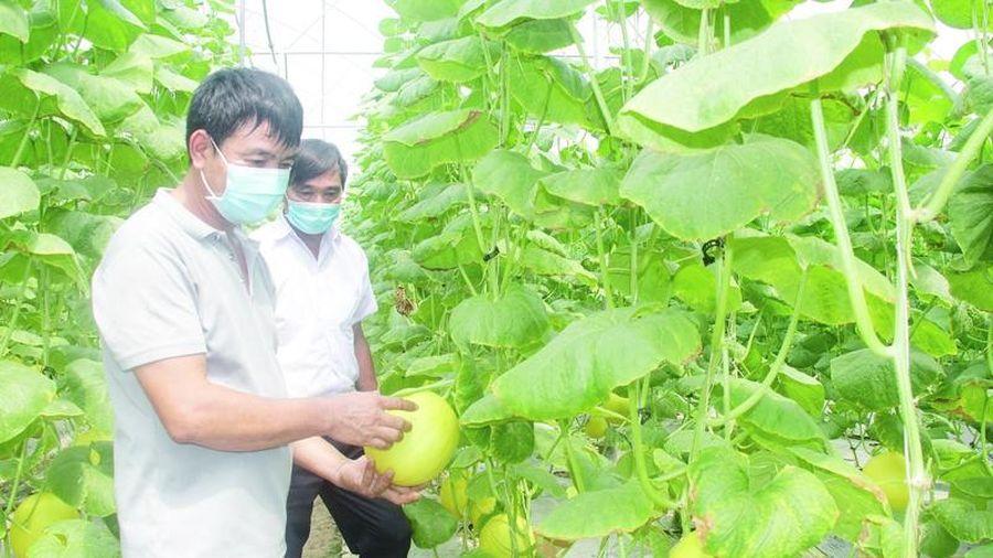 Phát triển nông nghiệp và xây dựng nông thôn mới bền vững: Liên kết vùng và hợp tác quốc tế