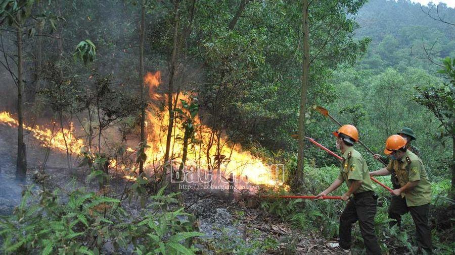 Bắc Giang: Nhiều khu vực có nguy cơ cao xảy ra cháy rừng