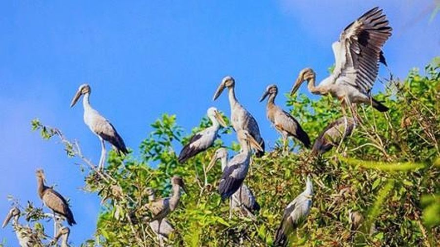 Du lịch sinh thái Khu bảo tồn thiên nhiên lung Ngọc Hoàng sẽ hấp dẫn hơn