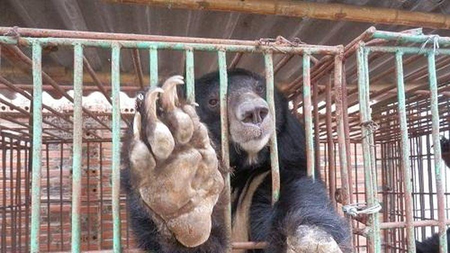 Thắt chặt quản lý nuôi nhốt động vật hoang dã vì mục đích thương mại