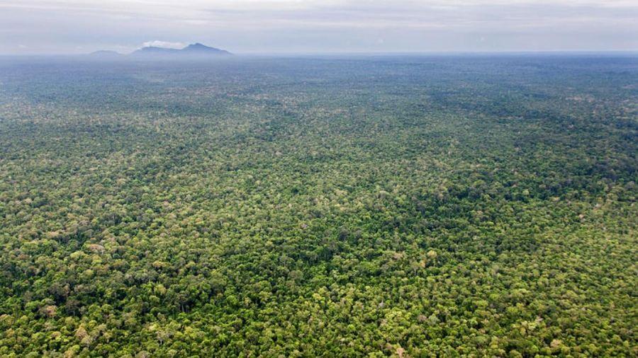 Mỹ dừng viện trợ cho dự án bảo vệ khu bảo tồn thiên nhiên lớn nhất tại Campuchia
