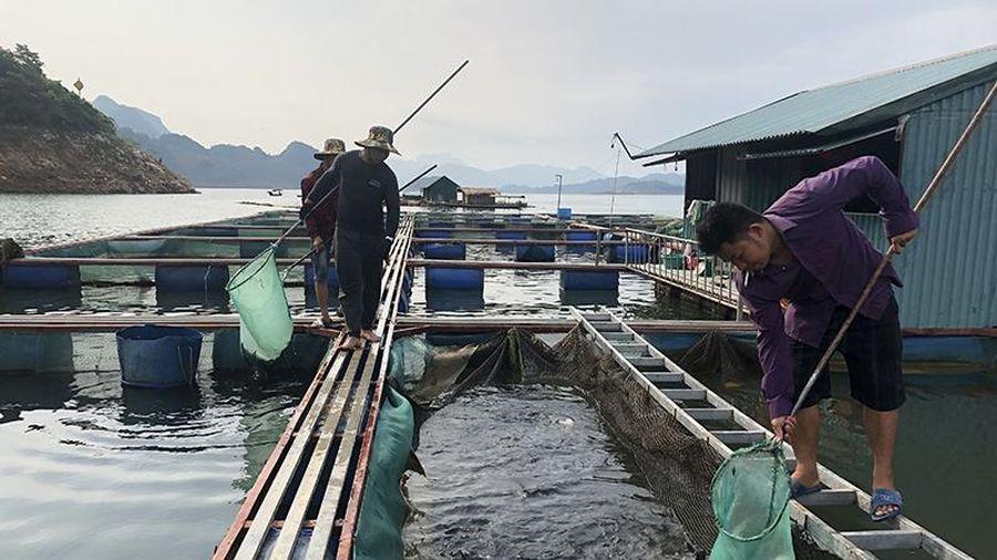 Quỳnh Nhai khuyến khích nghề nuôi cá lồng