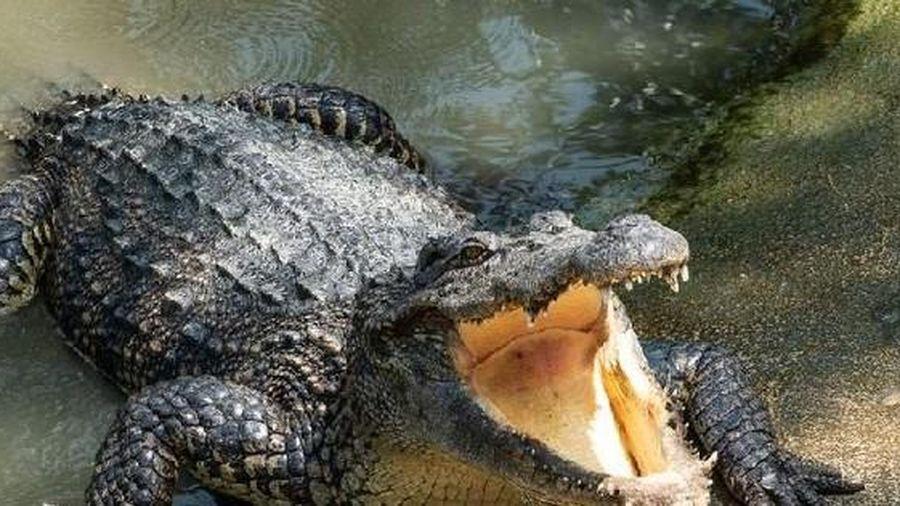 Giải mã hộp sọ khổng lồ bí ẩn, phát hiện loài cá sấu tiền sử dài tới 7m