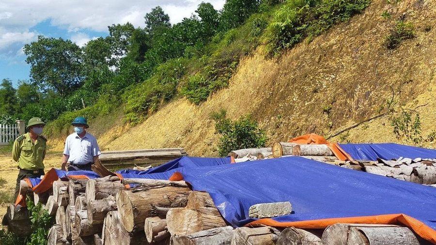 Chủ tịch MTTQ xã Vạn Xuân cùng đồng phạm bị bắt vì phá rừng