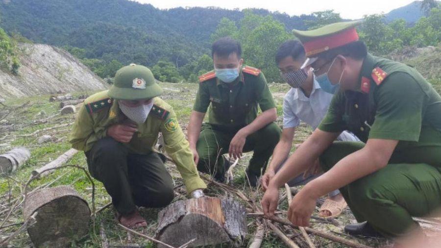 Khởi tố, bắt giam 5 đối tượng phá rừng