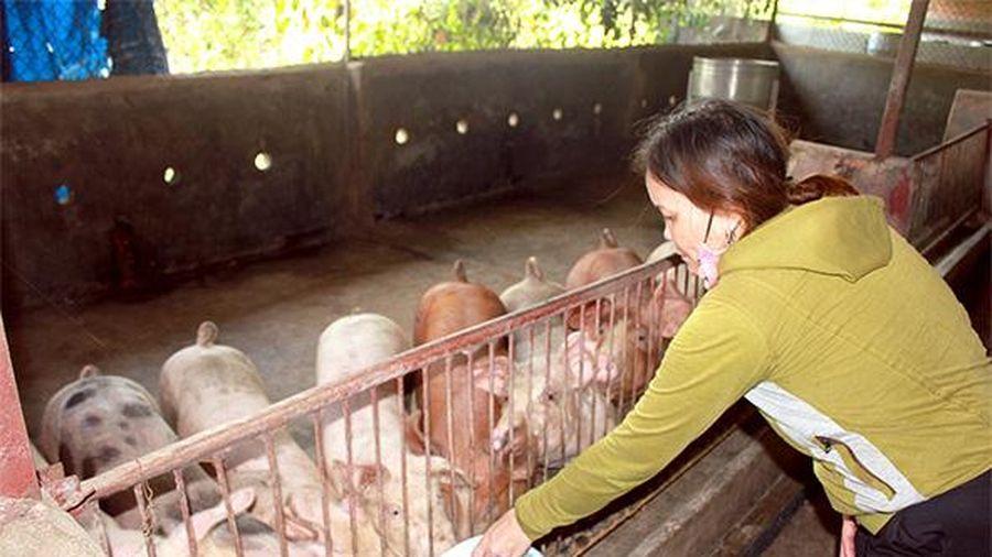 Cần chuyên nghiệp hóa chăn nuôi nhỏ